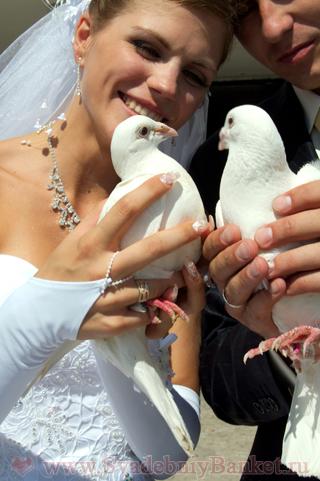 Молодожёны и голуби
