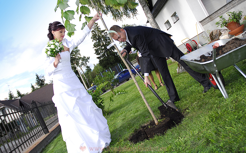 Молодожёны сажают дерево